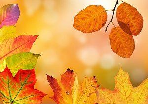 autumn 1649362 640